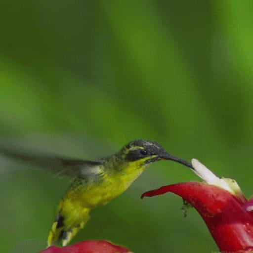Hummingbird LWP 1.1