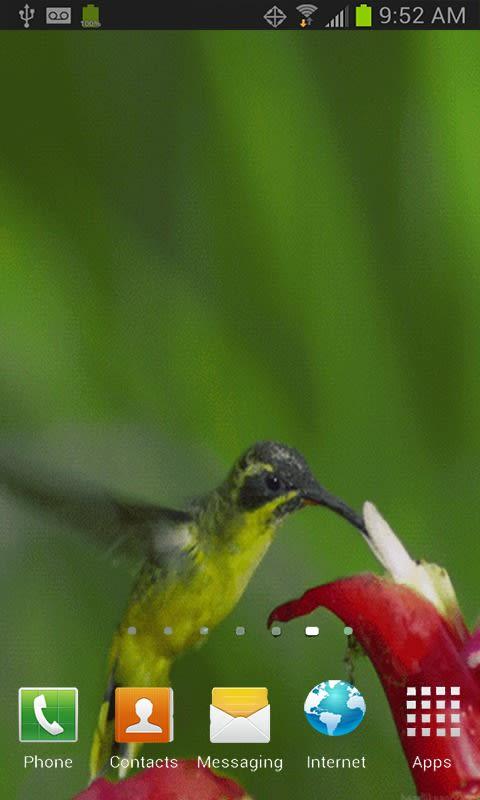 Hummingbird LWP