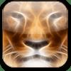 Tema Golden Lion