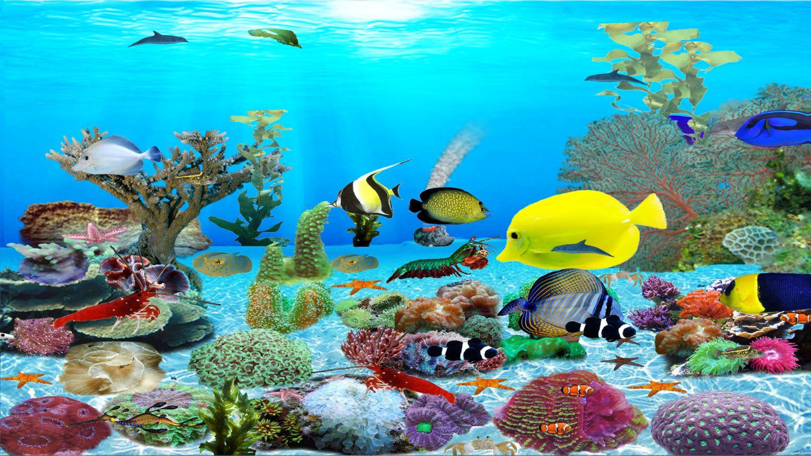 Dolphins aquarium download - Fish tank screensaver pc free ...