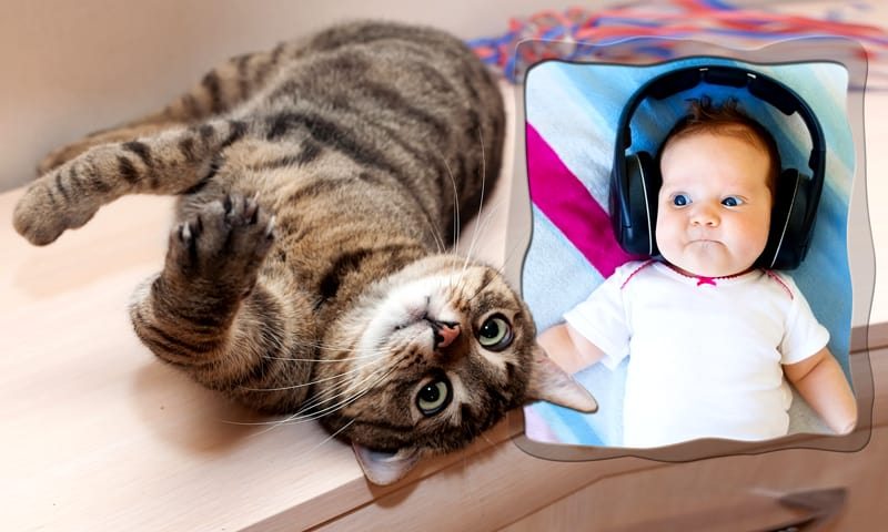 Funny Animal Photo Frames