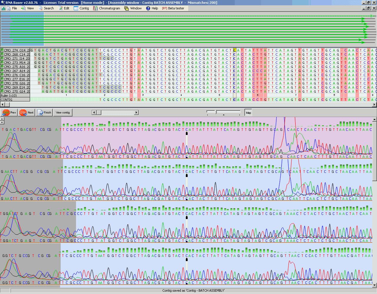 DNA Baser Séquence Assembleur