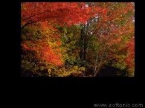 Autumn Lovers Supreme Screensaver