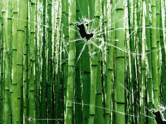 Broken Vista Bamboo Trees Wallpaper