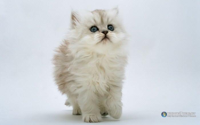 Tema Supercute Kittens