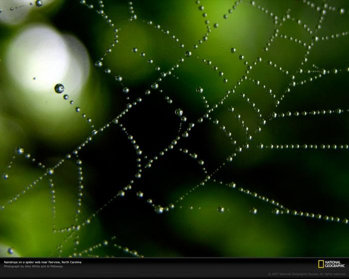 National Geographic Great Spider Web With Raindrops Wallpaper