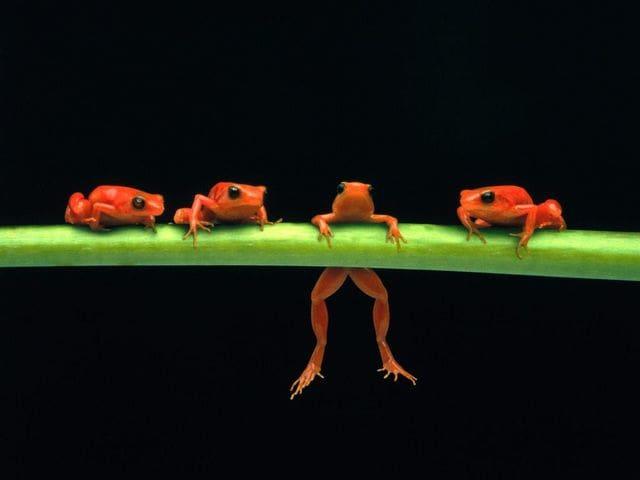 Amusing Frogs Free Screensaver