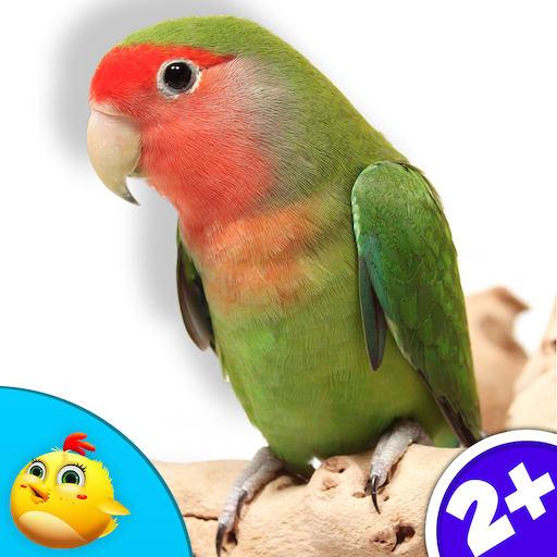 Real Bird Sounds