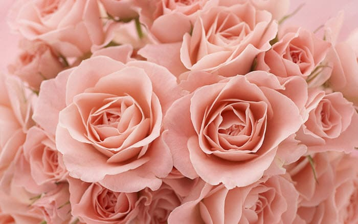 Roses theme