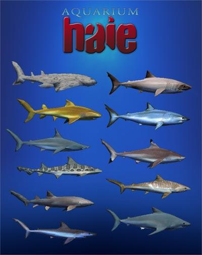 Aquarium Haie