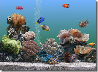SereneScreen Marine Aquarium Time 2.6.475