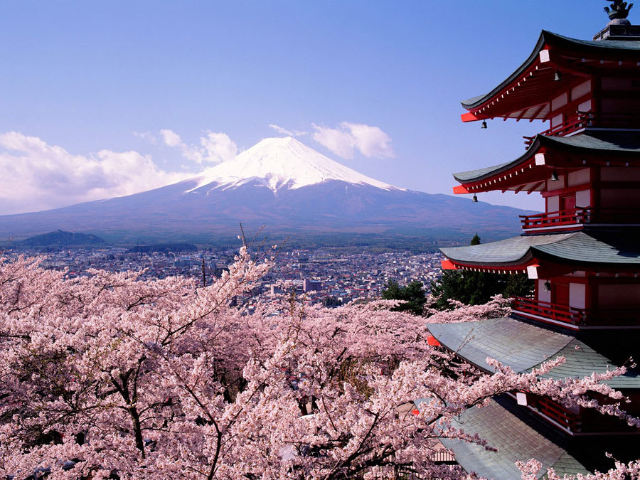 Kirschblüte in Japan Wallpaper