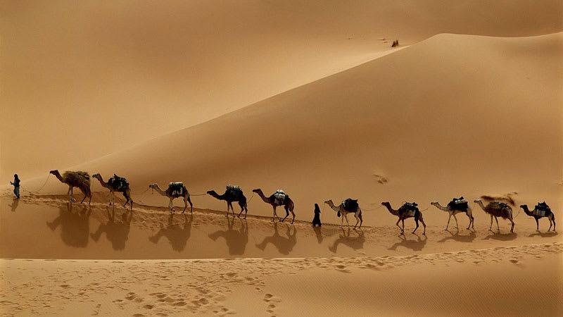 Camel Caravan in Libyan Desert Wallpaper