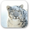 Snow Leopard Desktop Pictures
