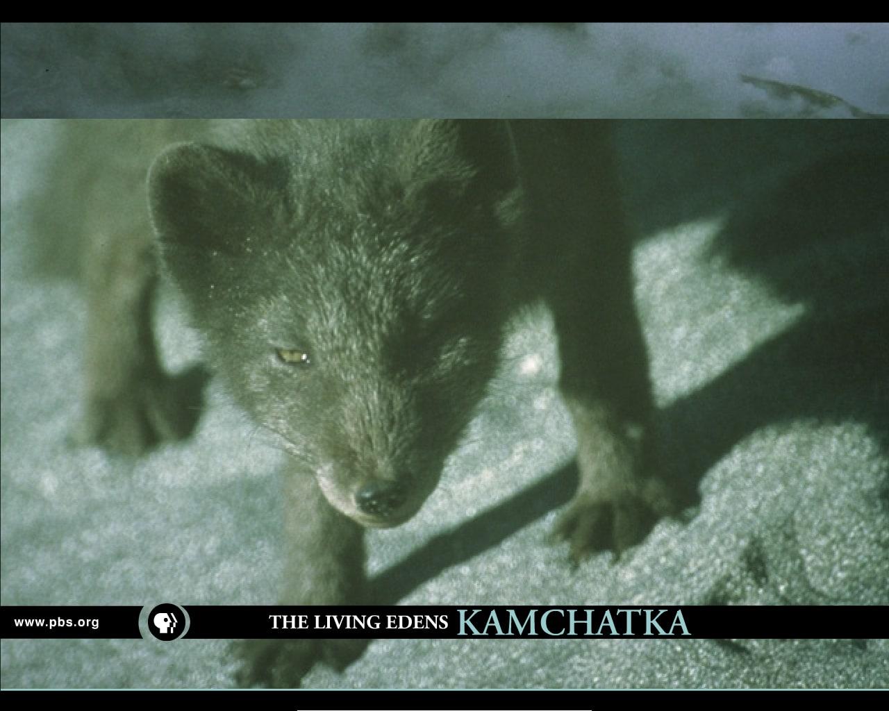 Kamchatka: Siberia's Forbidden Wilderness