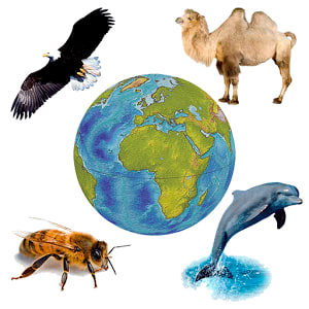 Sonidos de Fauna