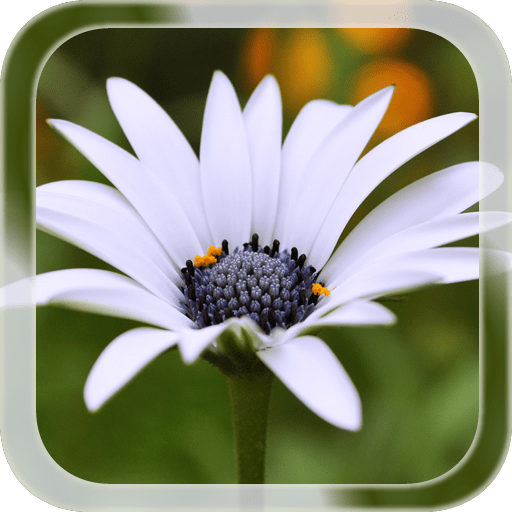 Summer Flower LWP 1.1