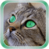 Cat Live Wallpaper 1.1