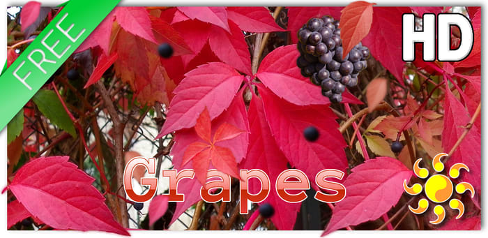 Autumn Grapes LWP