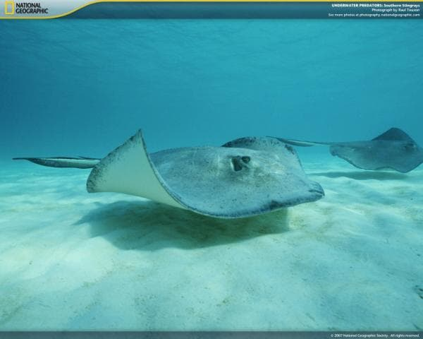 National Geographic Underwater Predators Screensaver