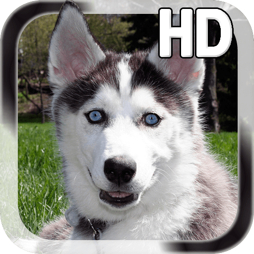 Puppy Husky Live Wallpaper
