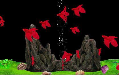 Betta Fish Tank Screensaver