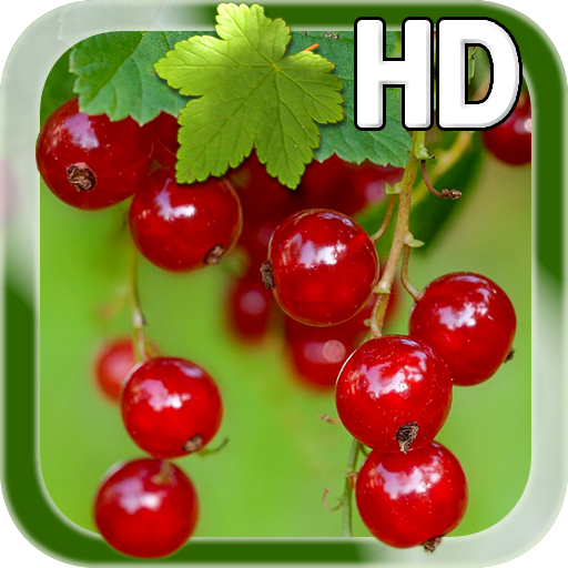 Berry Live Wallpaper