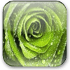 Tema Green Rose 1.0 (S60 5th)