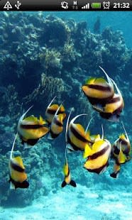 Angel Fish in Water