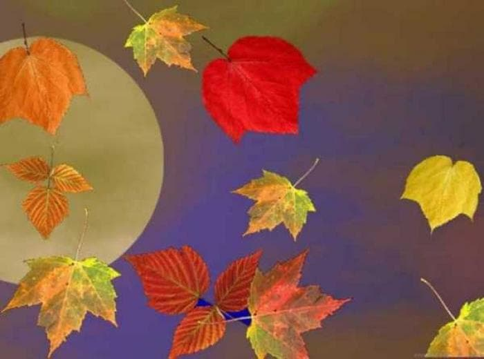 3D Falling Autumn Leaves