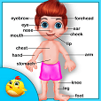 Learning Human Body Part - 2