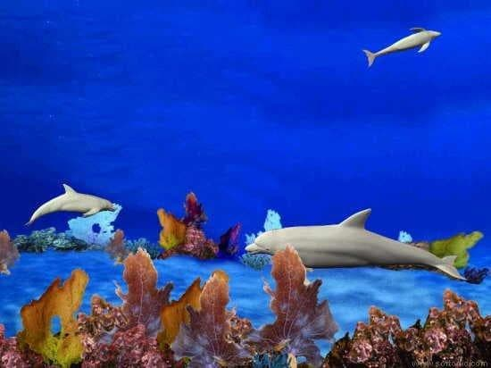 Dolphin Reef Screensaver