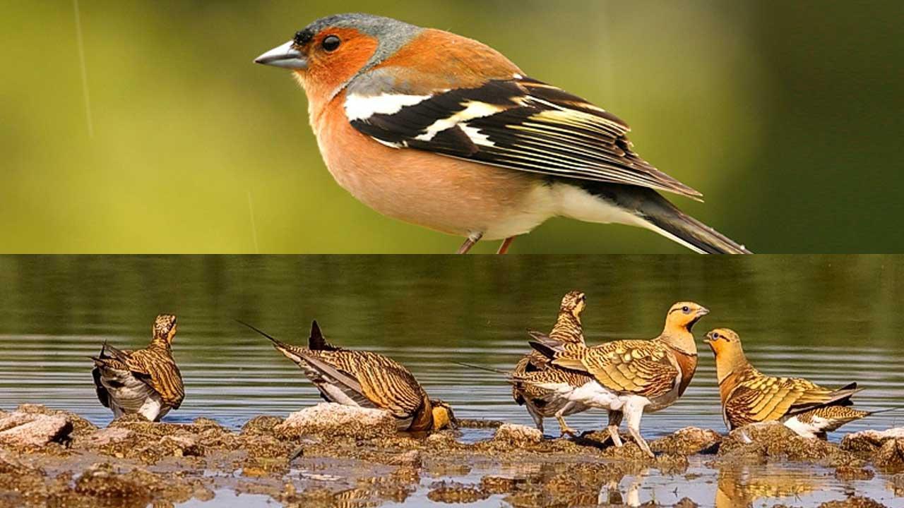 Las Aves de España