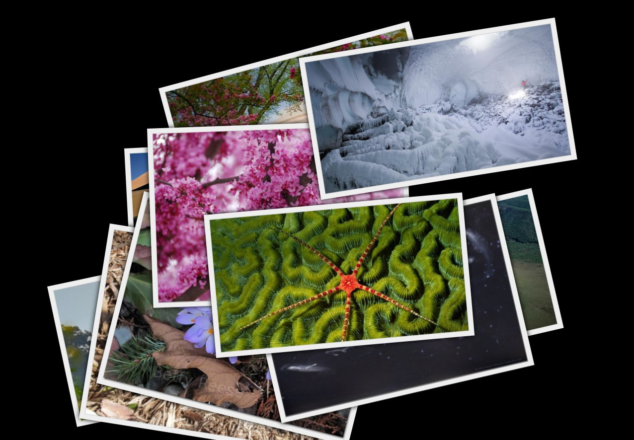 Photo Collage Screensaver