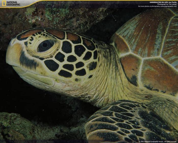 National Geographic Underwater Sea Life Screensaver