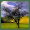 Tree Theme