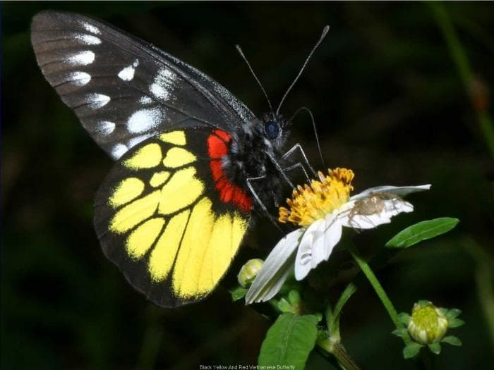 Butterfly screensaver