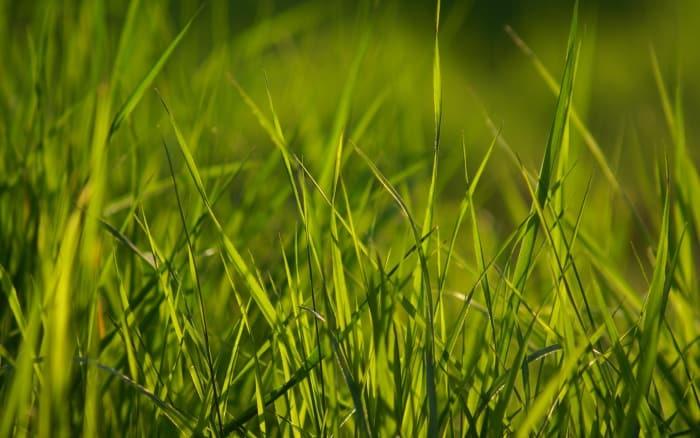 Tapety Wiosenne Trawy