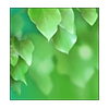 Abst Green Leaves Wallpaper